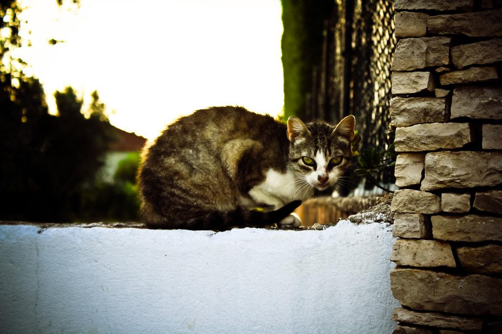 mamacat.jpg
