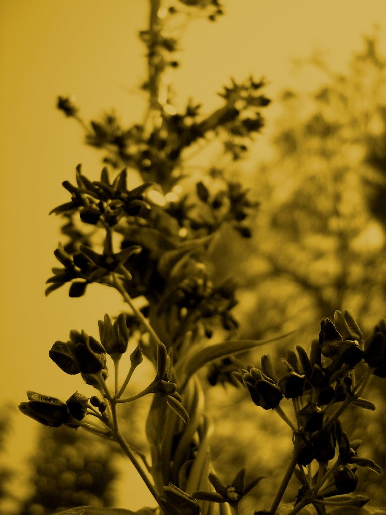 floraltwist.jpg