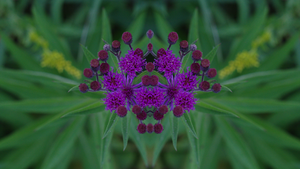 PurpleFlower2.png