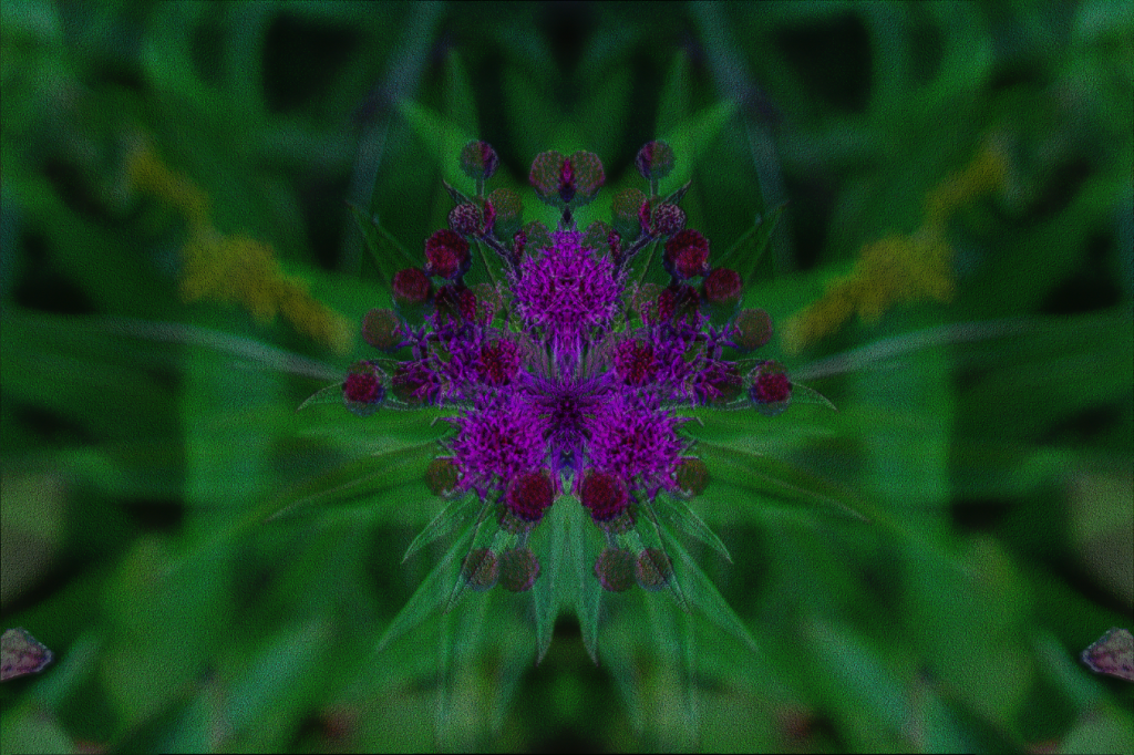 PurpleFlower1.png