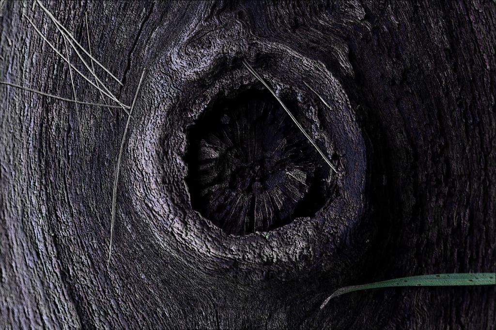 TreeKnot.png
